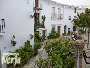 frigiliana pot plants